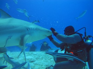 saving-our-sharks-playa-del-carmen