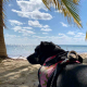 playa-coral-pet-friendly-cancun-mexico