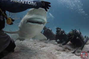 shark-diving-playa-del-carmen-mexico
